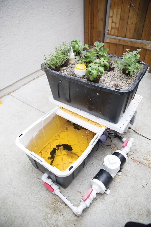 Aquaponic balcony garden with the power of Arduino 1
