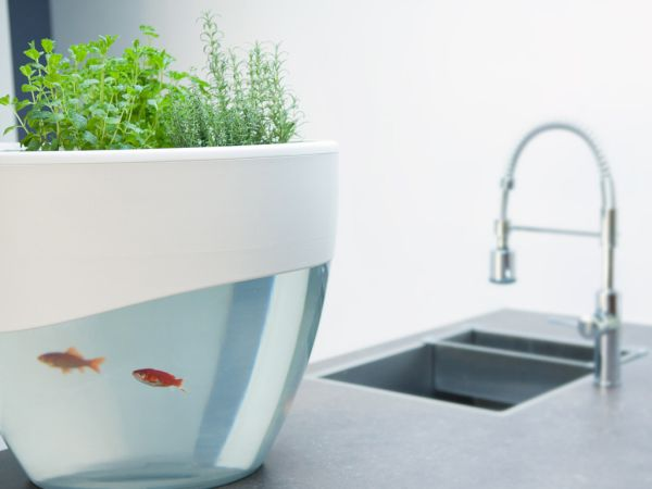 Self Cleaning Aquaponics Planter