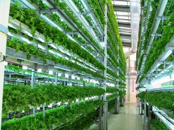 vertical farming (2)