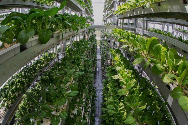 vertical farming (3)