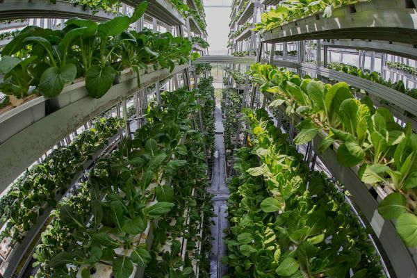 vertical farming (3)