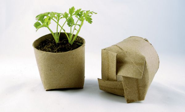 Seed Pots from Repurposed Cardboard Tubes