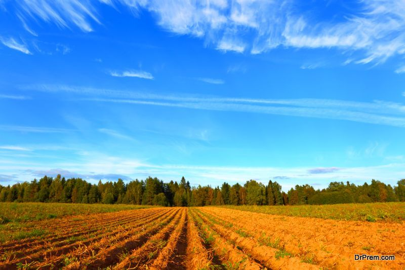 Perennial Agriculture