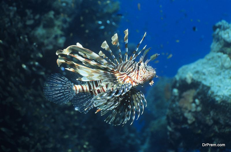 protect the marine life