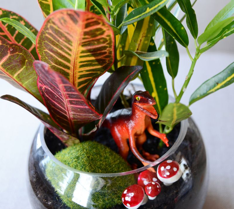Terrariums made from  toys