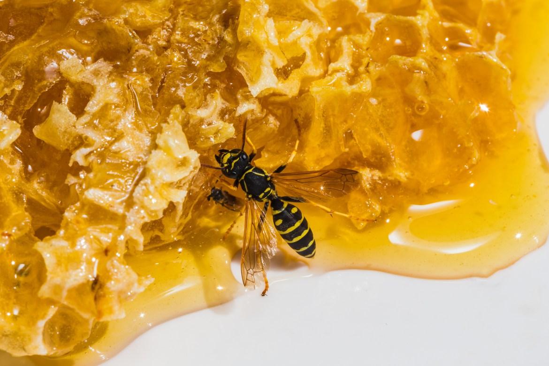 Start a hive