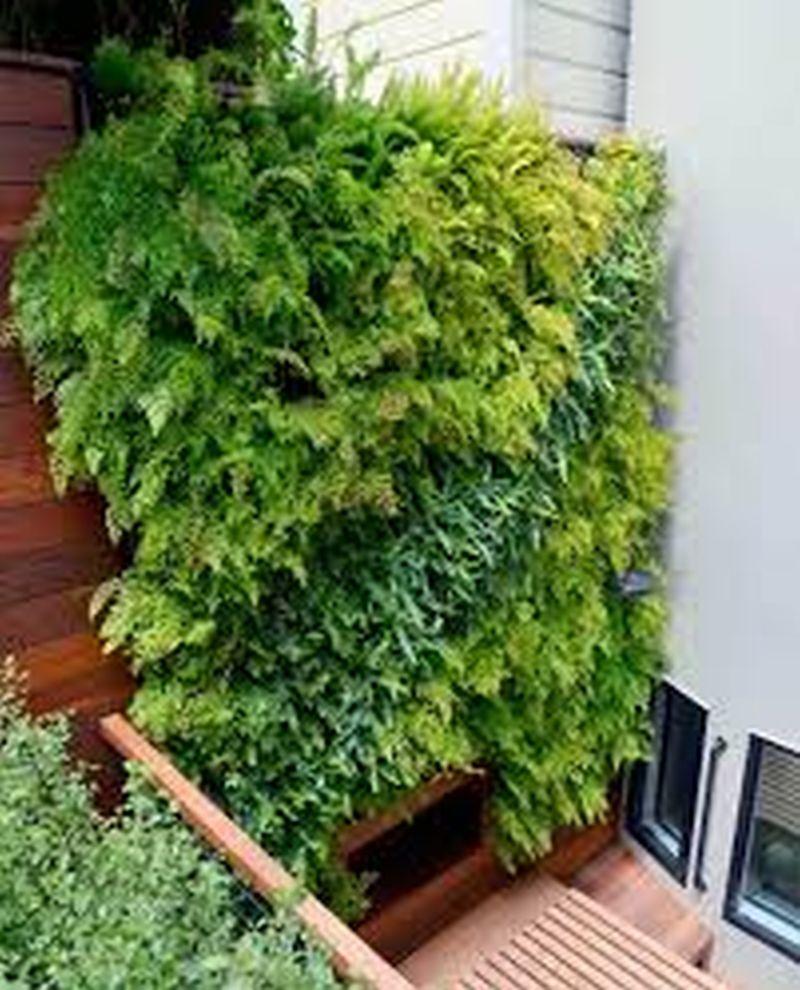 Self-Watering Indoor Vertical Garden Screen Ideas For Your