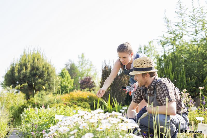 Buzz Worthy Garden