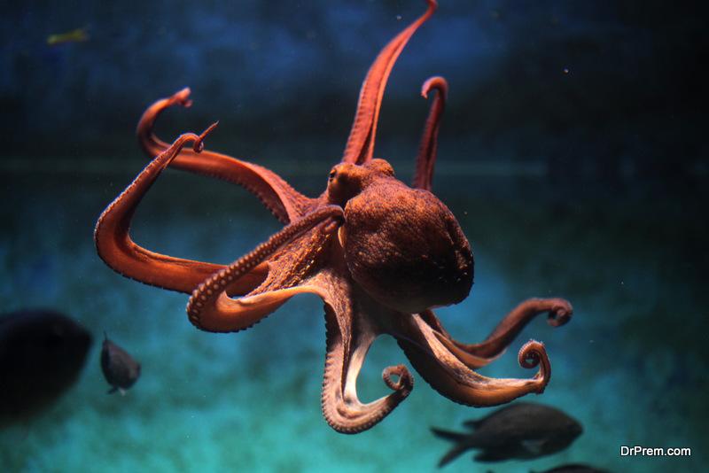 marine ecosystem.