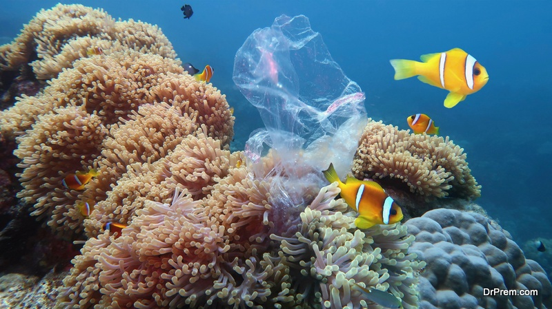 marine-life-effected-because-of-plastic