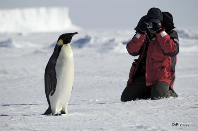 Adélie-Penguin