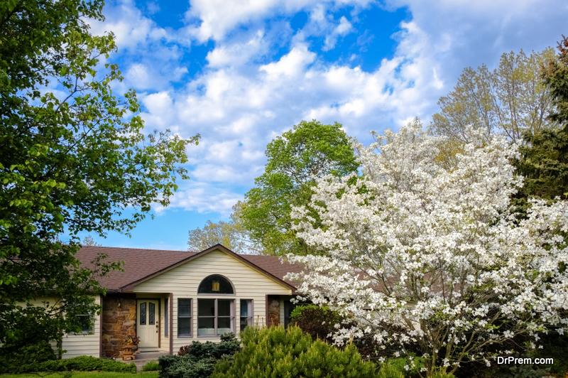 The Flowering Dogwood