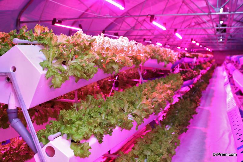 Aeroponic indoor farming