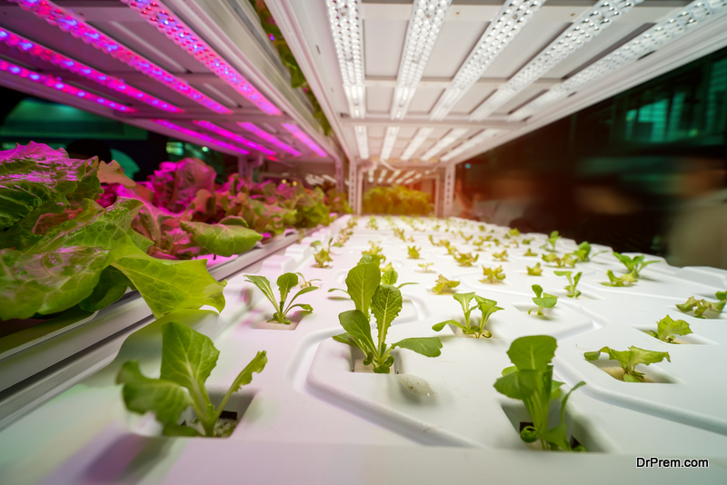 indoor farming key to solving the food production problem