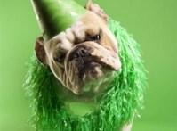 dog-green 2
