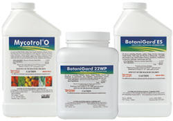 BotaniGard and Mycotrol Organic Biological Insecticides