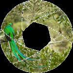 Shutter_favicon_quetzal_512index_transp_left