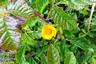 Poppy in Poison Oak marker icon