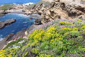Sea Lion Cove marker image