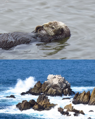 Sea Otter Rock