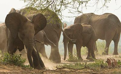 Upset elephant
