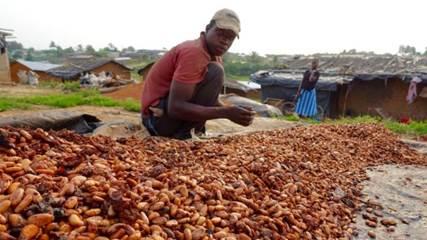 Cocao producerin Ivory Coast