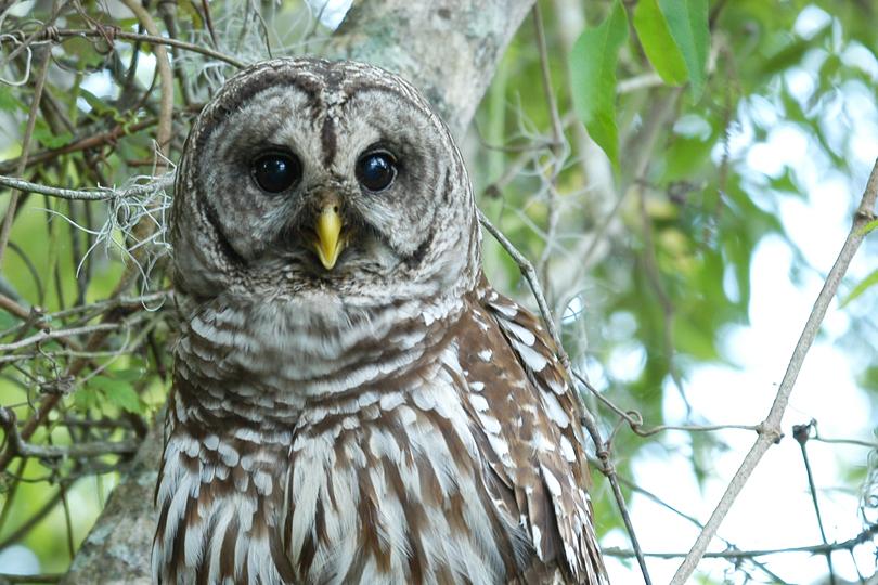 Wise Owl and Wisdom