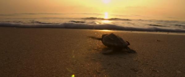 turtle incredible journey