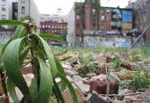 Green Vacant Lot