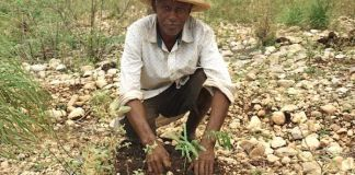 Timberland agroforestry