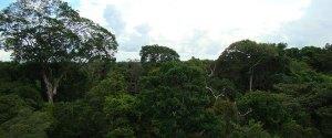 Amazon Brazil Trees