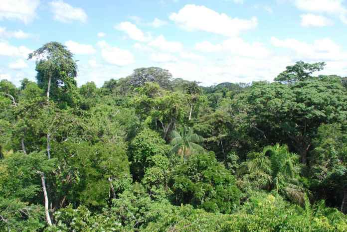 Peru rainforest