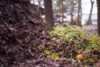 How to Make Your Own Compost: The Ultimate Guide
