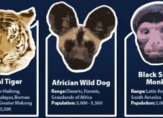 endangered animals infographic banner