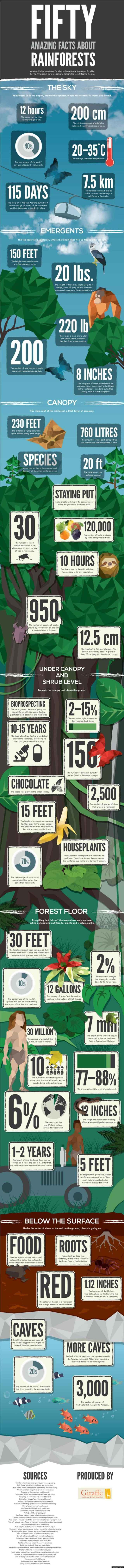 Amazing Facts About the Rainforest