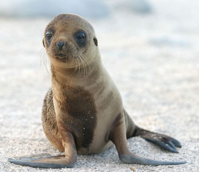 sea lion pup on sand