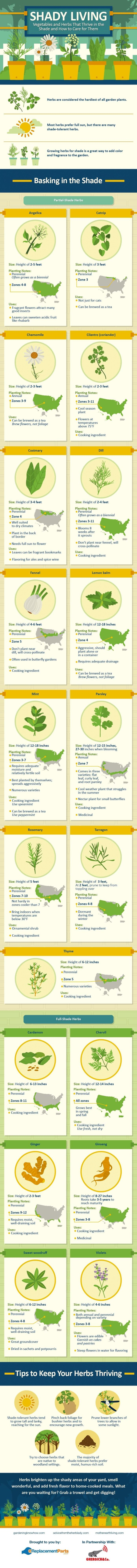 herbs that thrive in the shade