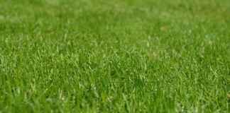 eco friendly lawn