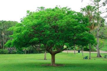 Tree and Shrub Service