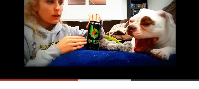 Bang Energy Quick Review with a Bulldog and a Food Scientist