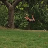 Acrobatics c