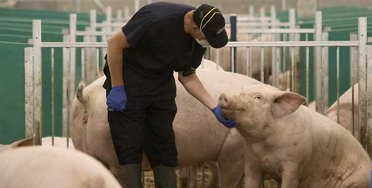 Employee with Pig