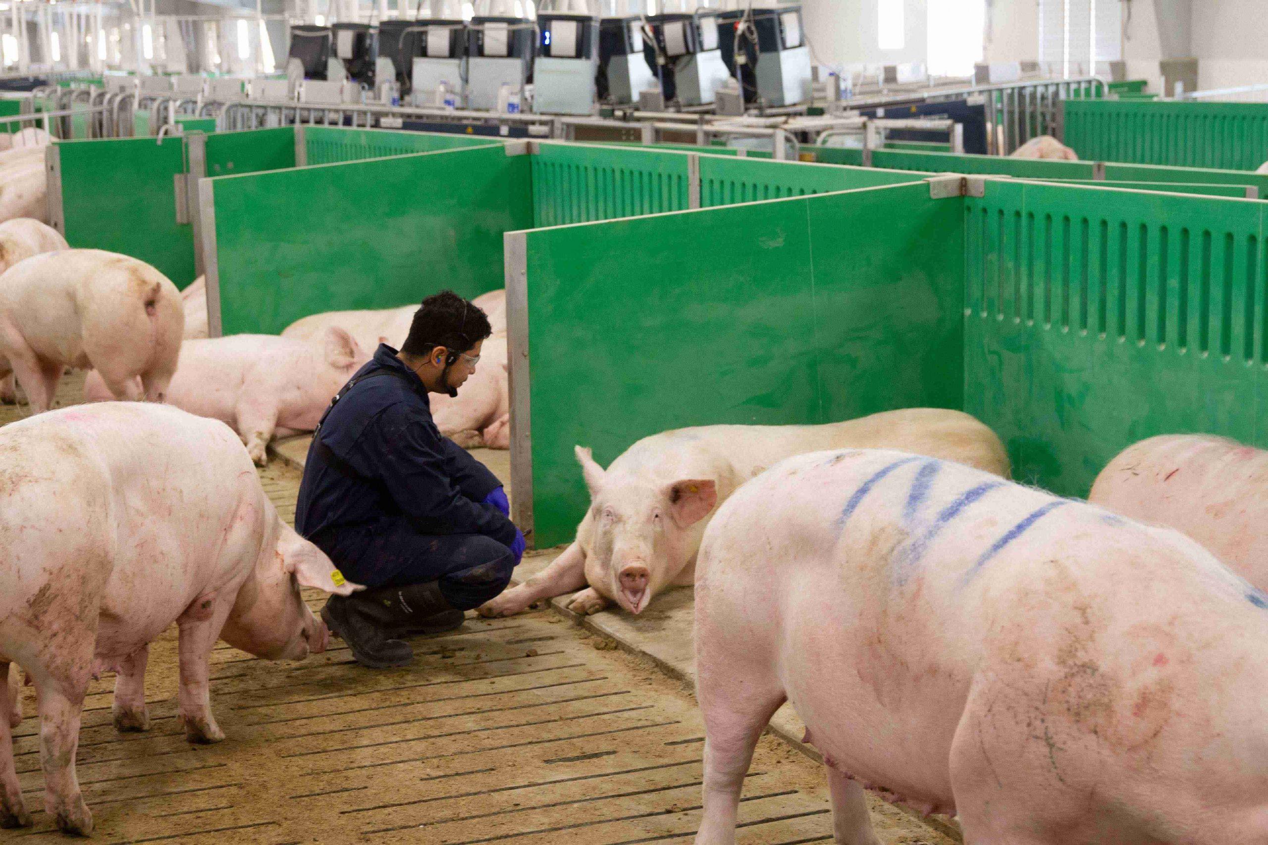 Employee in barn