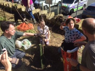 Planting a community orchard