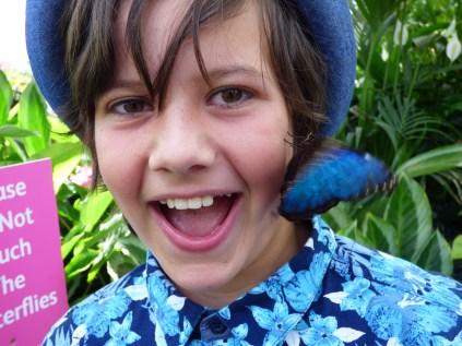 Butterfly pretending it's an earring!