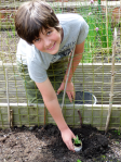 Planting in the raised beds