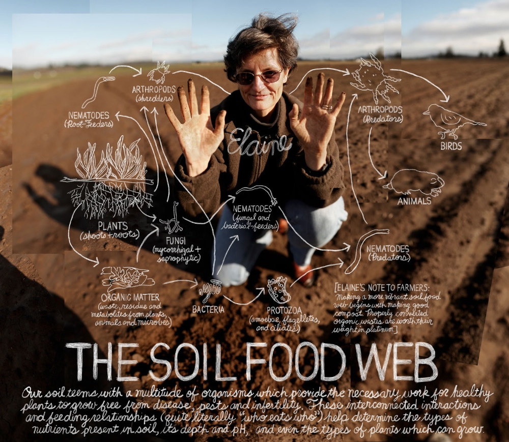 Soil Food Web Course with Dr. Elaine Ingham