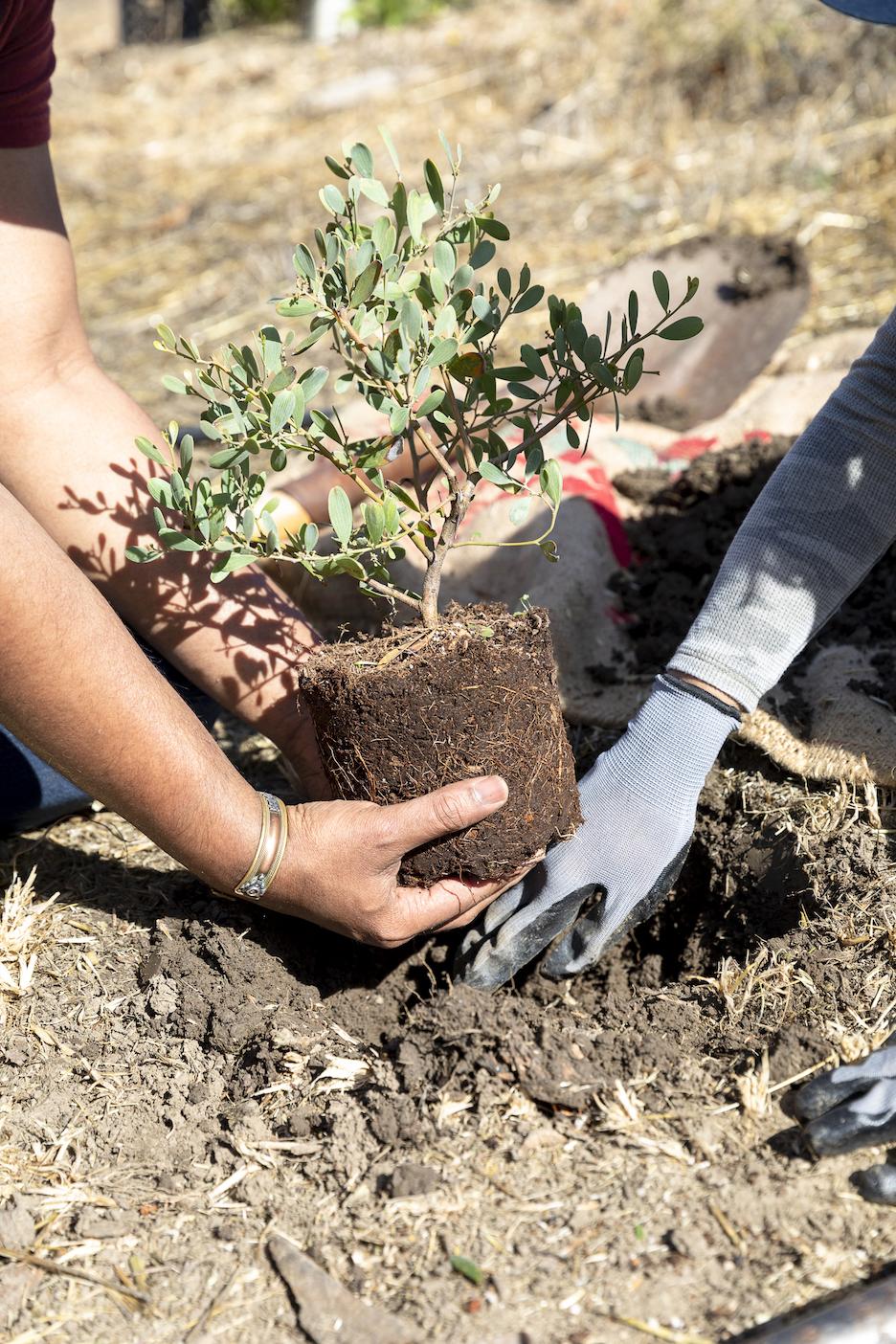 Become a GreenFriends Farm Volunteer!