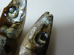two-heads-of-herring