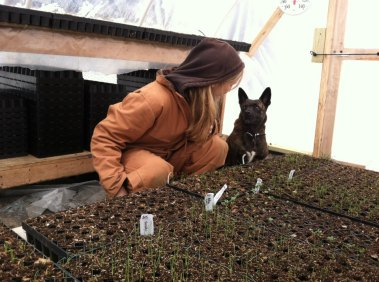 Leslie and Roscoe checkin' on the onion sprouts.